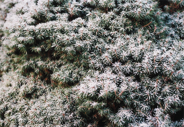 bastisRIKE: winterSTRUKTUR