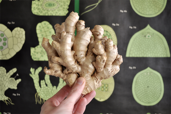 bastisRIKE ginger